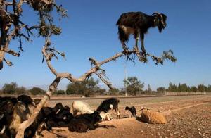 chad-grayot-climbing-tree-blog